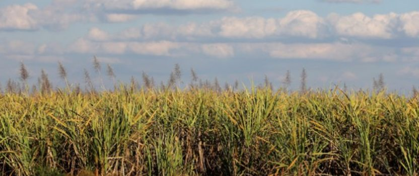 Rep. Yoho: The 'zero-for-zero' policy on sugar could be a roadmap forward for the US on trade